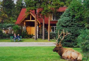 Exterior of Alpine Village Jasper with elk on front lawn